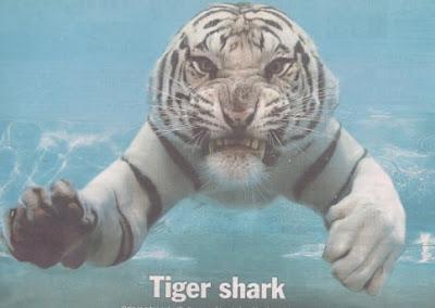 Tiger shark?